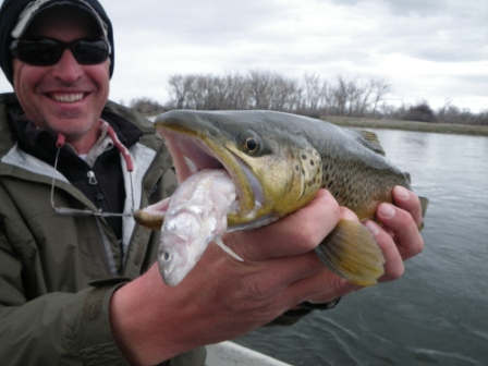 Bighorn Brown eating a whitefish