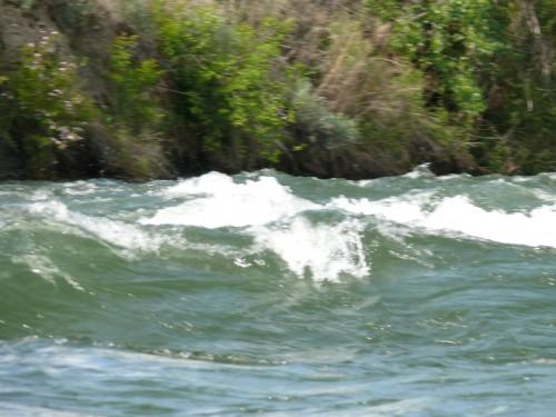 Bighorn Rapids